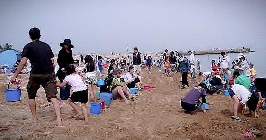 ゴールデンウィークに箱作ぴちぴちビーチ潮干狩り場に行ってきました