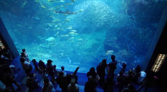 水族館 デート 東京