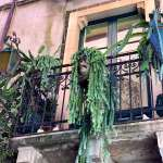 Potted plants on a balcony in Taormina, Sicily