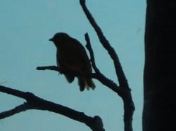 Bird noir