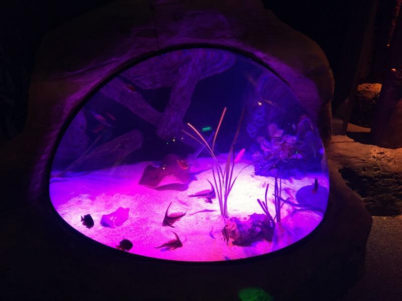 Family Fun Review: SEA LIFE Michigan Aquarium Detroit - O