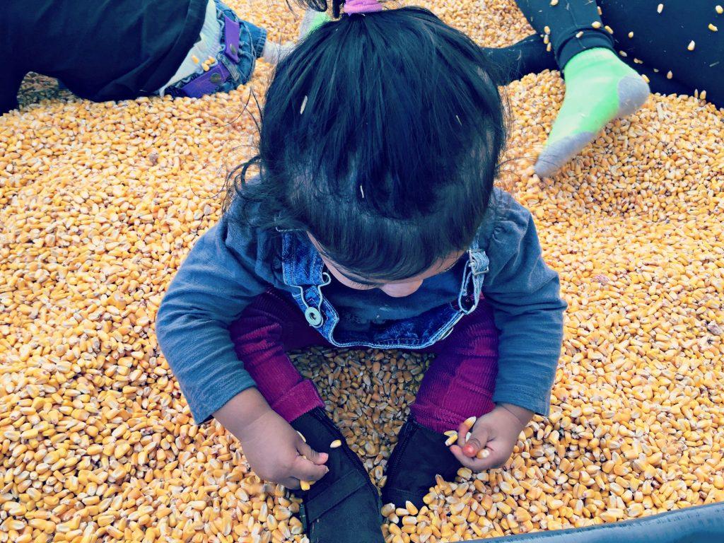 Konows Corn Maze Corn Pit