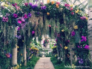 Breathtaking canopy of orchids at The Orchid Show at Chicago Botanic Garden