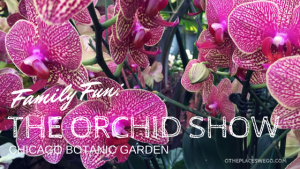 The Orchid Show at Chicago Botanic Garden