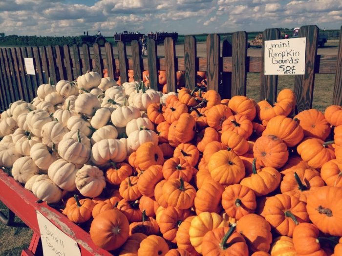 Family Fun during Shades of Autumn Festival at Stades Farm in McHenry