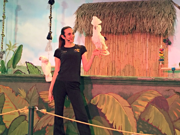 Dancing Horses Theatre Lake Geneva - Bird Show