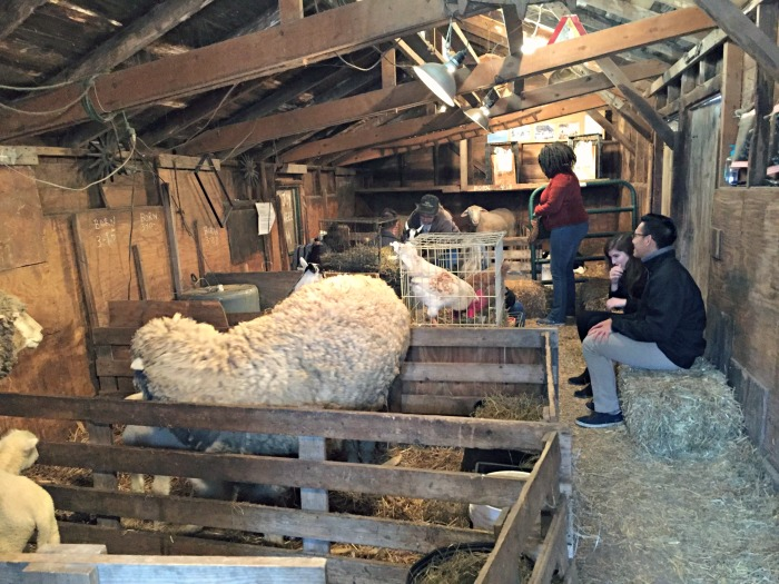 Family Fun On Enjoy Pioneer Farm In Hampshire Illinois Hold A Baby Lamb And