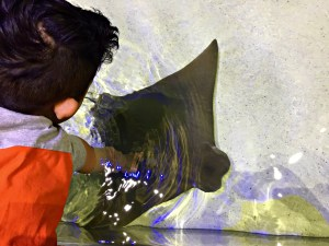Family Fun in Dubuque, Iowa's oldest city, including the National Mississippi River Museum & Aquarium
