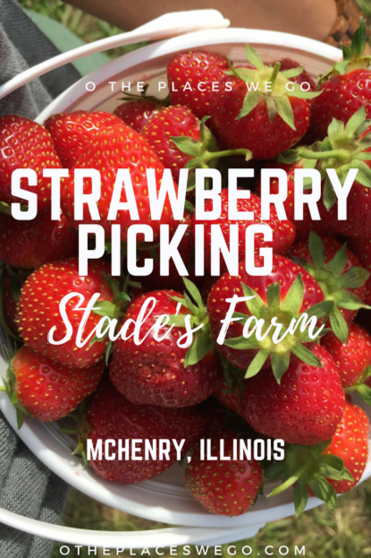 Strawberry picking fun with the family at Stade's Farm & Market in McHenry, Illinois.