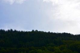 Woods - Bergen