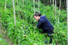 WFP-Colombia-CIAT International Center for Tropical Agriculture
