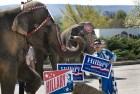 Hillary_Clinton_presidential_race_circus_president_campaign