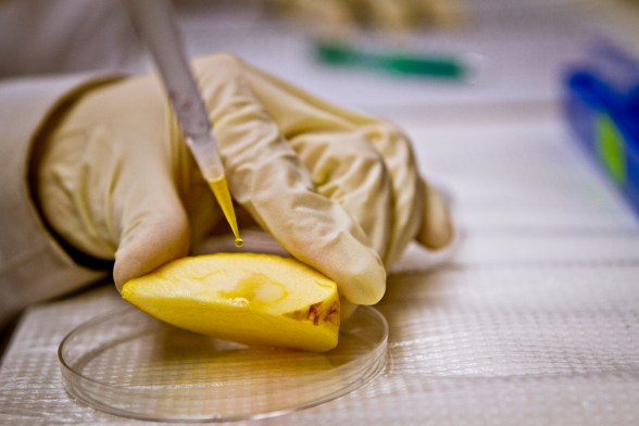 nanoparticles-in-food