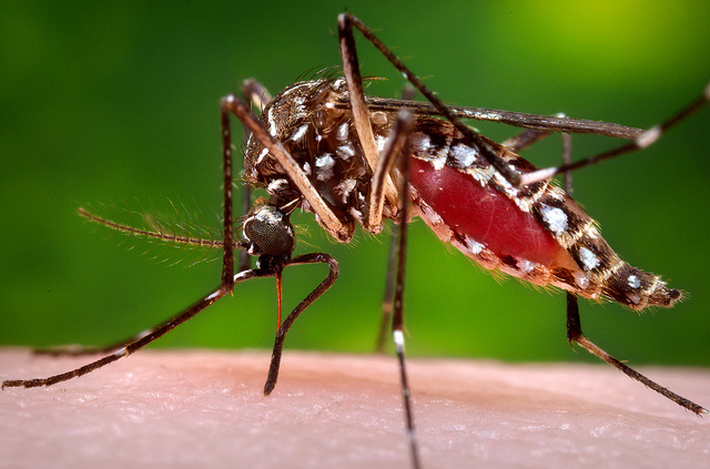 The Mosquito Gap
