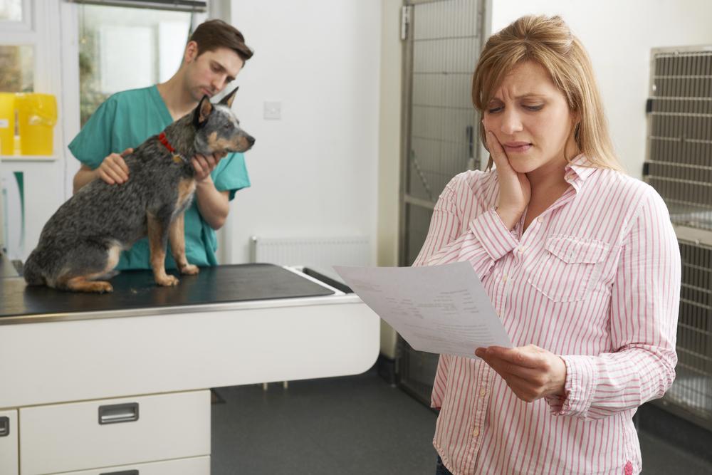Corporate Veterinarians Serve Profit Over Animals