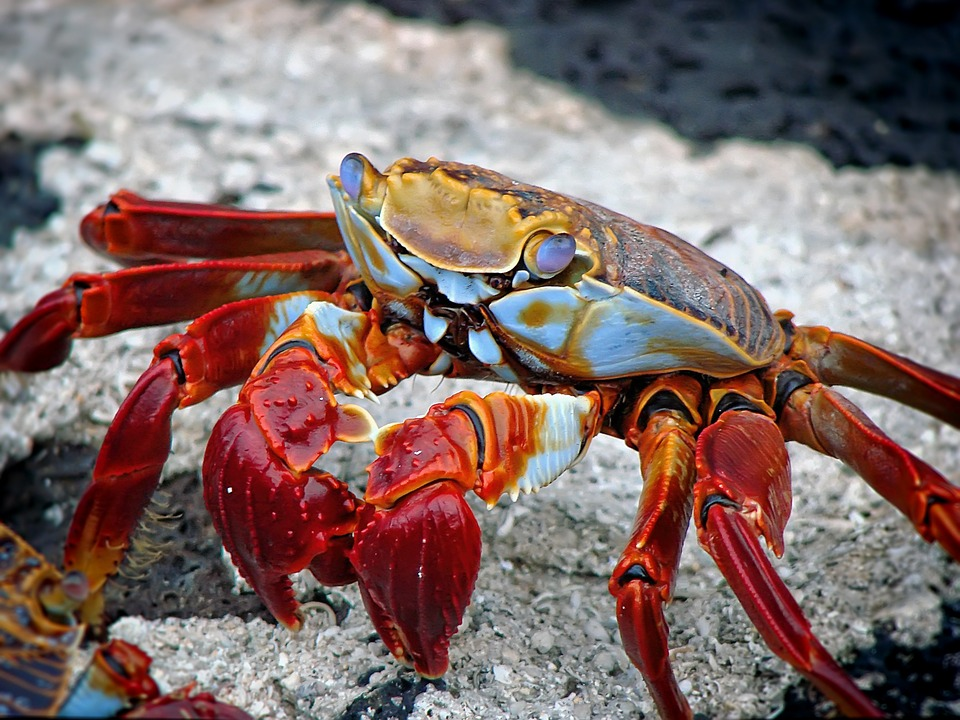 Crabs are scavengers and will pick up the loose pieces of magic left behind.