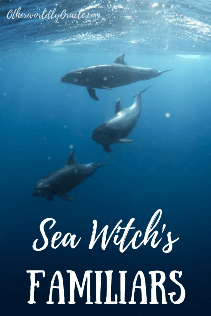 The sea witch's familiars include the dolphin, sea birds, manatee, whale, sea turtle and more!