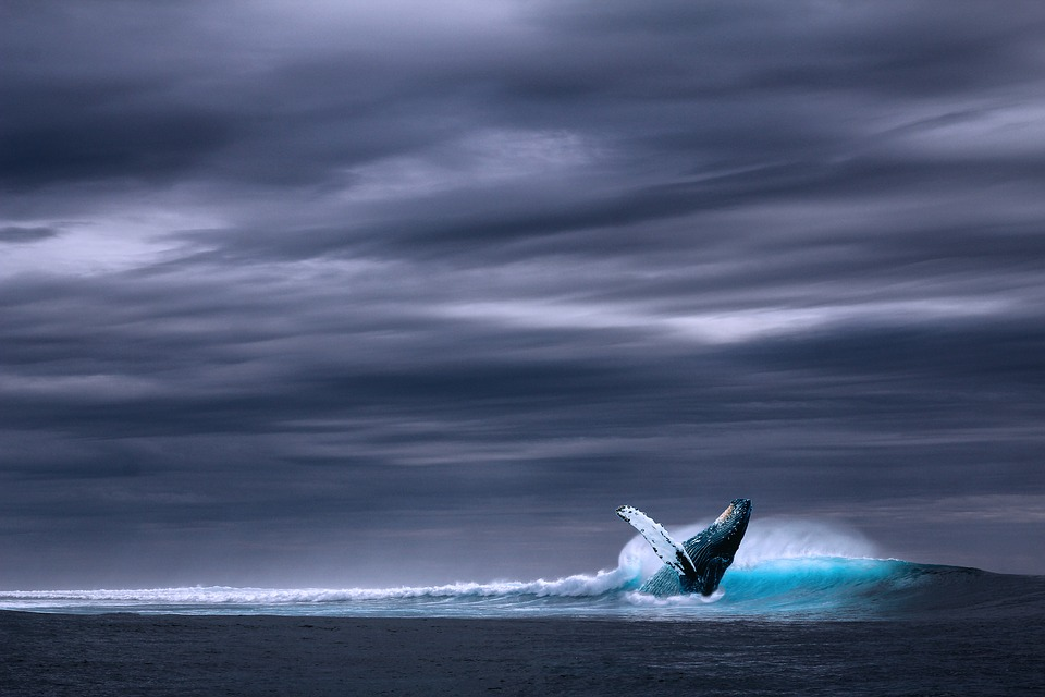 The whale familiar helps us breach the surface between the mundane and spiritual worlds.