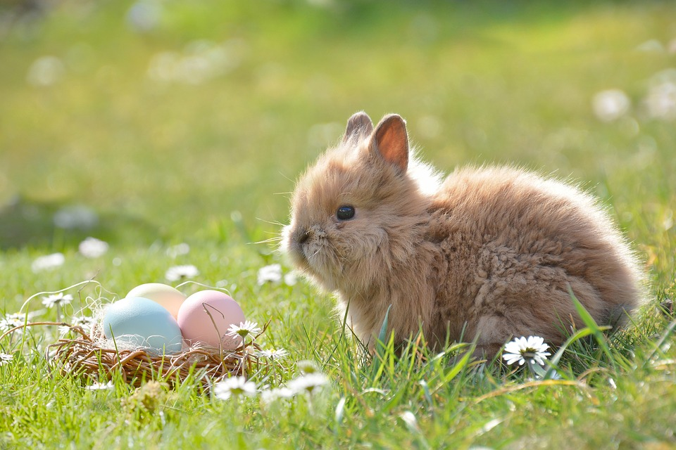 The easter bunny and eggs are all symbols of fertility, as is Eostre Goddess of Spring.