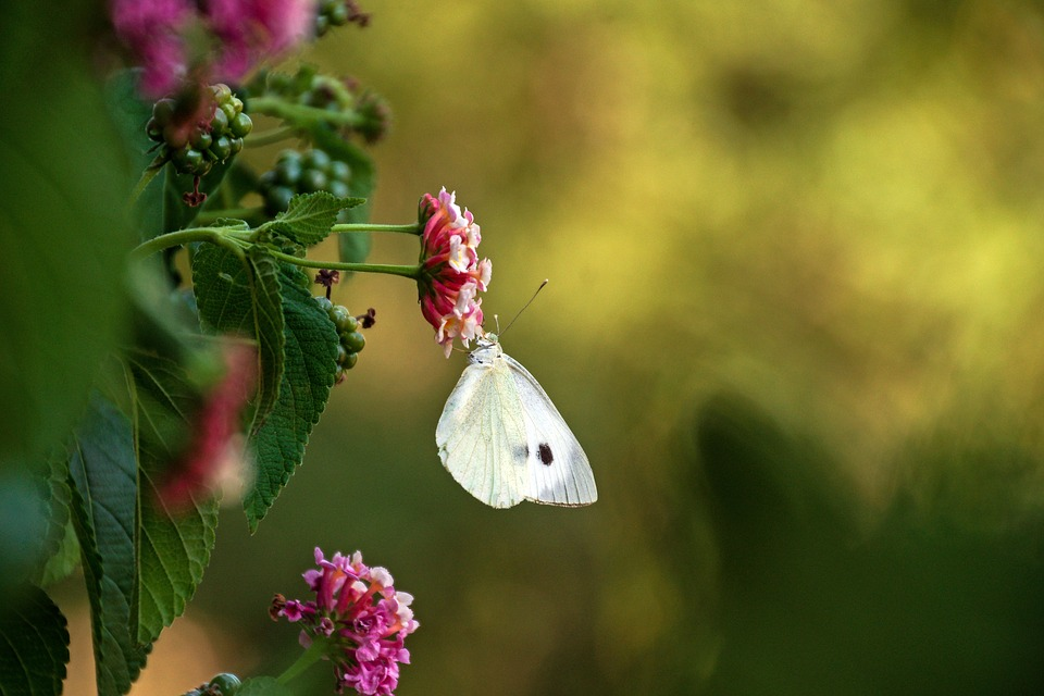 Moth Symbolism: The white moth meaning represents our ancestors and guardians.