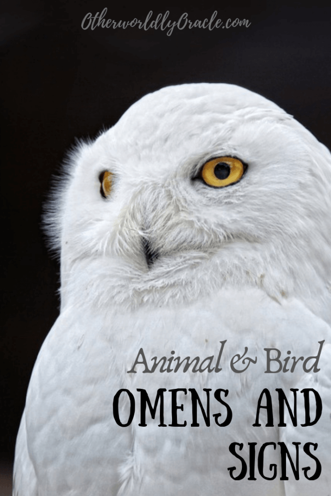 Common Animal Omens and Signs including rabbits, deer, foxes, birds, and more.