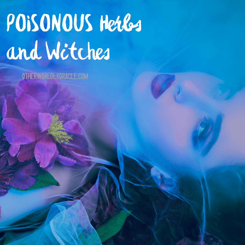 Poisonous Herbs and Witches: History, Lore and Modern Use