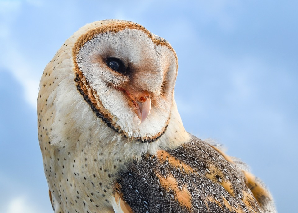 Owl mythology is found all over the world and varies by culture.