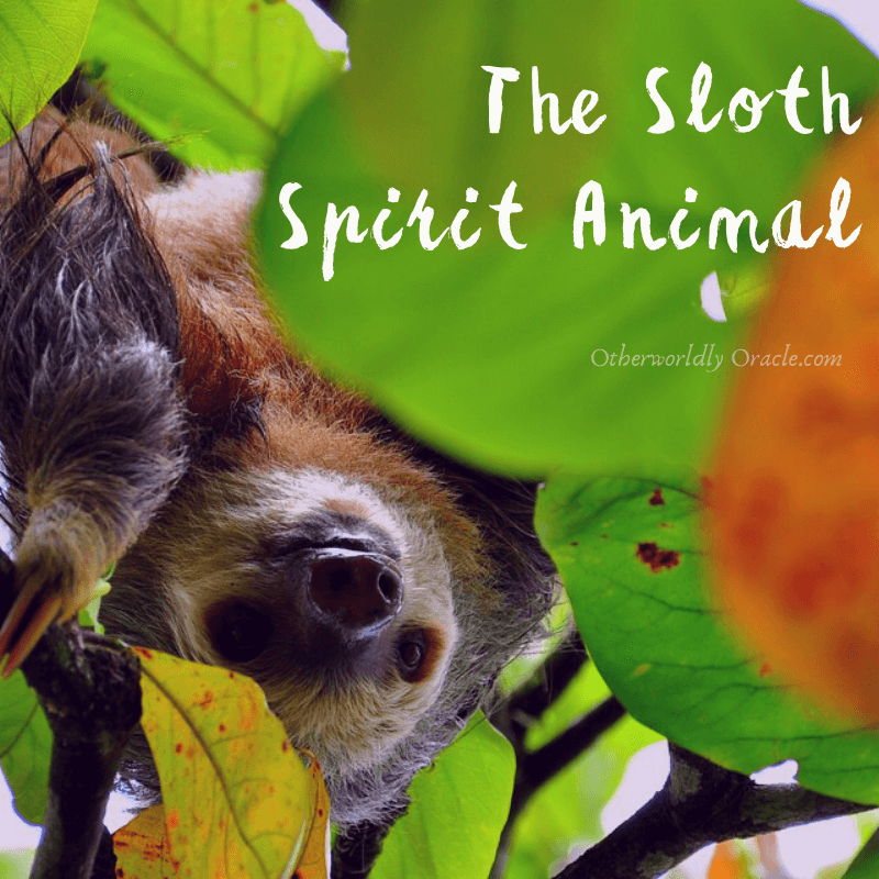 Sloth Spirit Animal's Messages for You