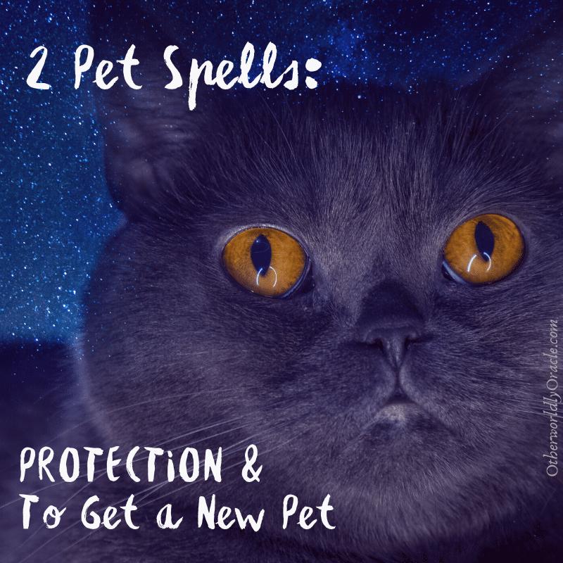 Pet Spells: A Pet Protection Spell Jar & Spell to Get a Pet