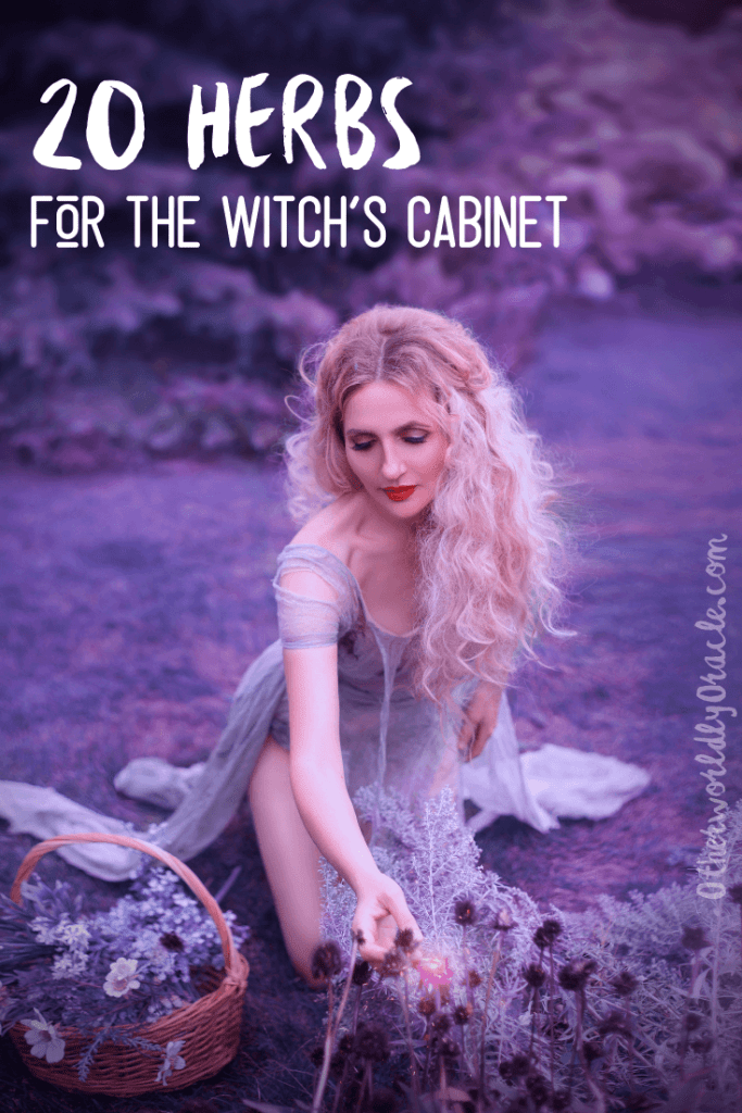 20 MUST-HAVE Herbs for the Witch's Herb Cabinet