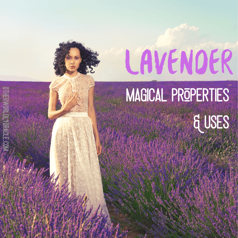 Lavender Magical Properties & 8 Powerful Lavender Magical Uses
