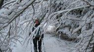 Magda fing an (und zog es durch) sämtliche herabhängenden Zweige vom Schnee zu befreien...