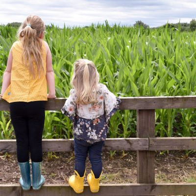 7 Reasons to visit the National Forest Adventure Farm this Summer