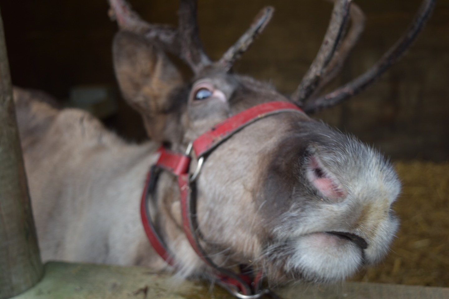 Christmas Days Out in Staffordshire and Cheshire