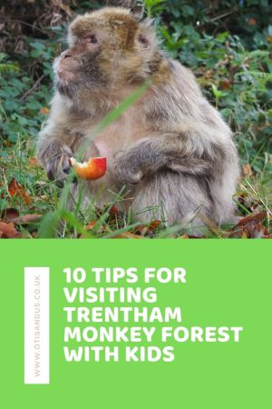10 tips for visiting Trentham Monkey Forest with kids