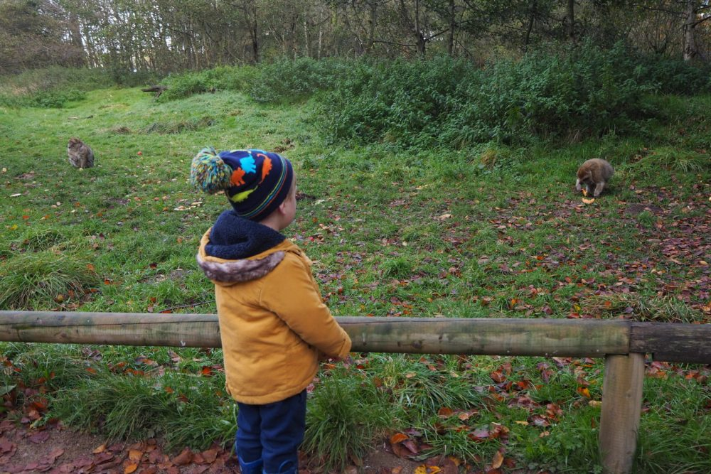 10 tips for visiting Trentham Monkey Forest with kids I Stoke on Trent