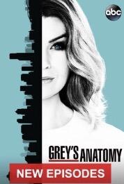 When Will Grey's Anatomy Season 14 Be on Netflix? Netflix Release Date?
