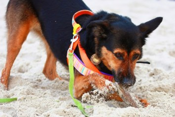 pies morze plaża polska otojanka