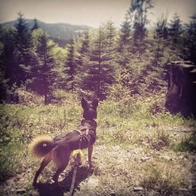 otojanka dogtrekking frikaj beskid wyspowy z psem