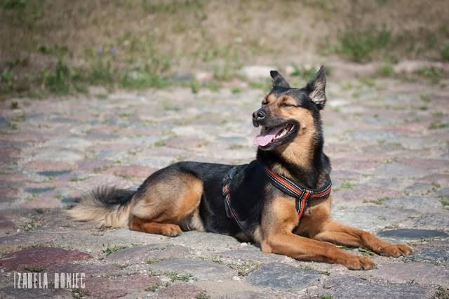 psi język otwartości otojanka