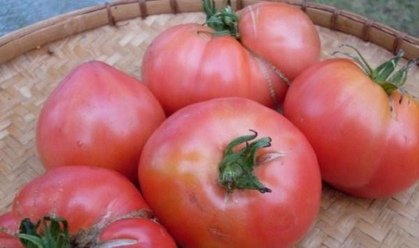Томат Розовый гигант: характеристика и описание сорта ...