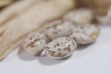 白インゲン豆(ホワイトビギーンズ)の画像