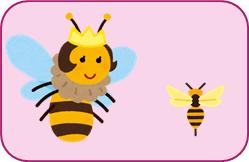 女王バチとメス蜂の大きさを比較している画像
