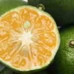 青切りシークヮーサー顆粒GOLDノビレチンPLUSの最安値は楽天?amazon?それとも公式?