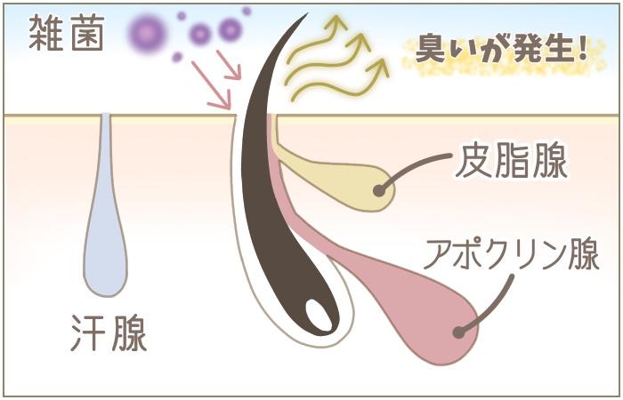 チチガのメカニズムを説明している画像