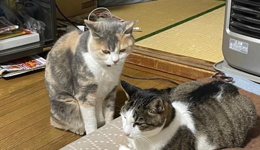 愛猫テンちゃんを大学病院へ連れて行った 費用は?
