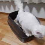 【猫のトイレ おすすめ】3年飼ってようやくたどり着いた我が家の答え