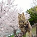 猫が家から逃げてしまった時に探しだす方法と対応まとめ