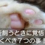 猫を飼うときに注意するべき7つの事|世話の仕方は?かかる費用は?