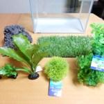 おすすめの人工水草/アクアリウム水槽立ち上げ人工水草レイアウトに挑戦してみた!
